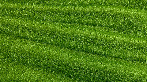 Slowly waving grassy background Animation