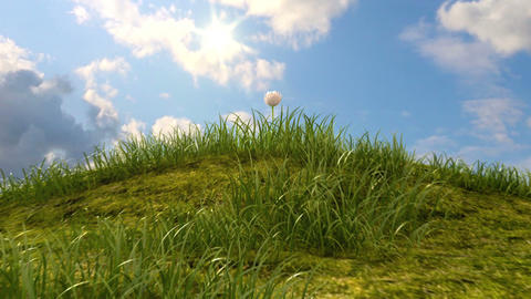 grassy hill with chamomile and ladybird Stock Video Footage