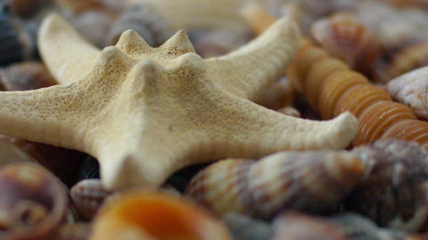 Starfish And Shells stock footage