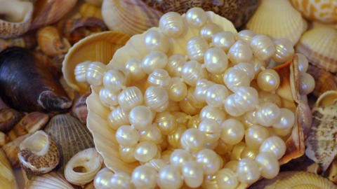 Shells and Pearls Stock Video Footage