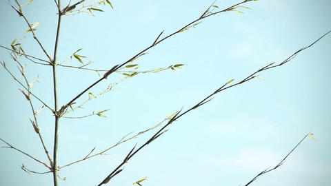 Bamboo grass and sky#2 笹の葉と空#2 Stock Video Footage