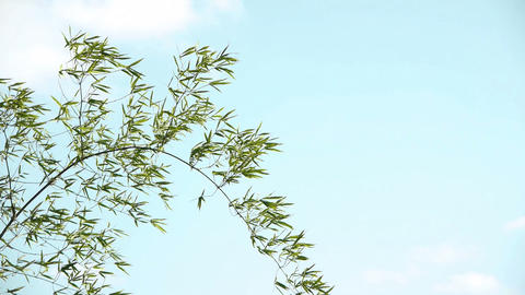 Bamboo grass and sky#4 笹の葉と空#4 Stock Video Footage