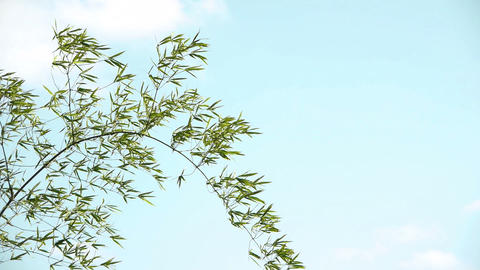 Bamboo grass and sky#4 笹の葉と空#4 Footage