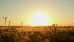 Fields of Barley Stock Video Footage