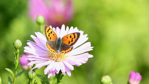 Butterfly ภาพไม่มีลิขสิทธิ์