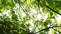 Sunlight Stock Video Footage