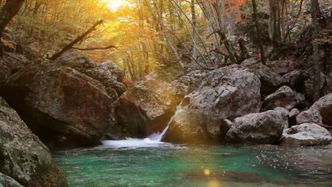 Wilderness Stream Stock Video Footage