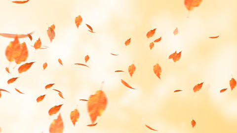 The leaf which flies in the sky Stock Video Footage