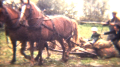 Girl Being Pulled By A Horse Team 1941 Vintage 8mm film Stock Video Footage