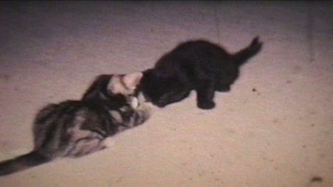 Kittens Playing 1968 Vintage 8mm film Footage