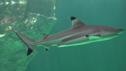 Sharks And Predators Of The Deep Ocean Footage