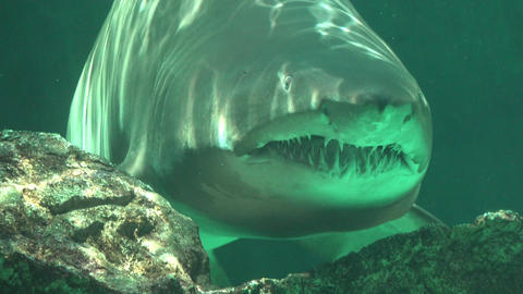 Predatory Fish And Sea Creatures Footage
