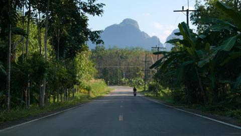 Asphalt street in a tropical bush Footage