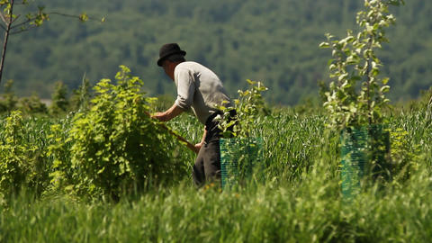 Man cutting weeds Footage