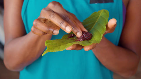 Detail Shot Of Tourist Woman Eating Organic Cocoa Paste By Hand On A Leaf Footage