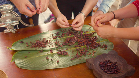 Hands Peeling Roasted Cocoa Beans Ecuador Live Action