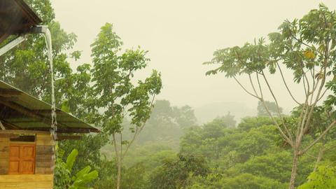 Rain Over The Amazon Rainforest In Ecuador Live Action
