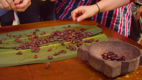 Tourists Peeling Roasted Cocoa Beans Live Action