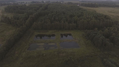 Aerial view.Flying over the forest Live Action