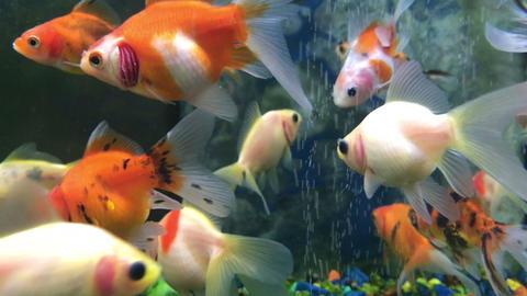 colored aquarium fish swim in the water Live Action