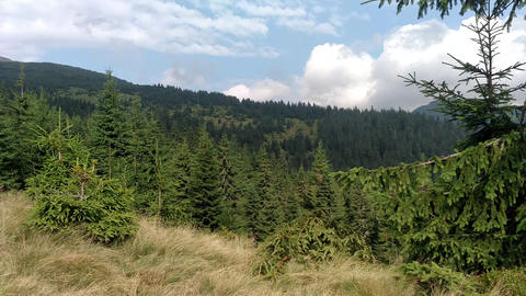 Slow motion of clouds Spruce mountains and sky Environment in sunny day ature in the Carpathians Footage