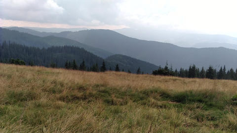 The wind moves the grass Spruce mountains and sky Environment in sunny day ature in the Carpathians Footage