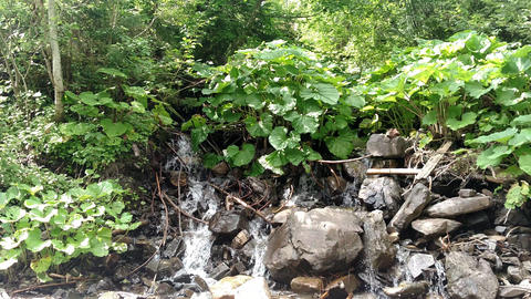 Waterfall water flowing from mountain forest landscape Fast flowing liquid among the rocks rocks and Footage