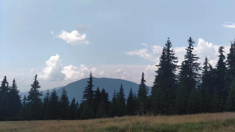 The wind moves the grass Spruce mountains and sky Environment in sunny day ature in the Carpathians Live Action