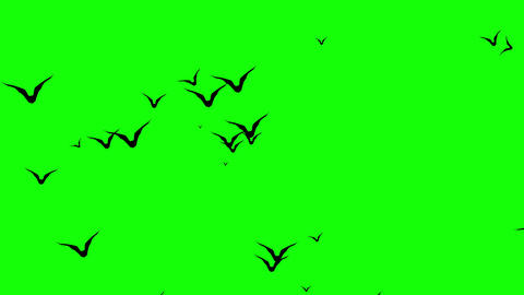 A Swarm of Spooky Halloween bats flying around screen. Simply remove green background and overlay on Animation