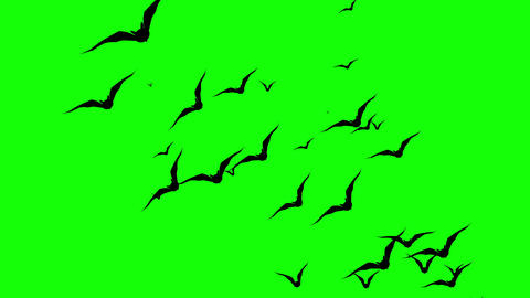 A swarm of bats appears and flies towards the top of the screen. Spooky Halloween animated Animation