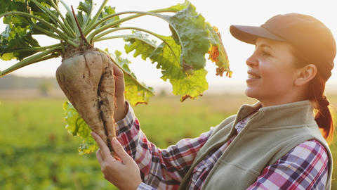 A female farmer holding ripe sugar beet Live Action