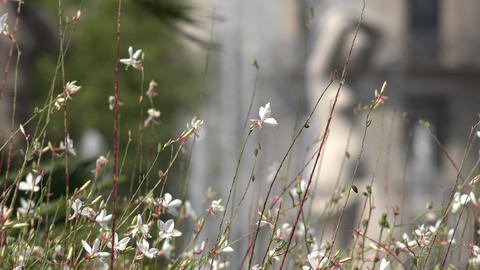 Wild White Flowers And Stems Footage