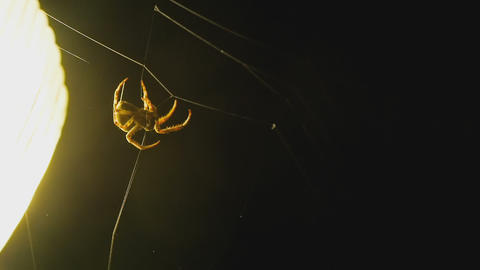 The spider weaves a web of near lantern Footage