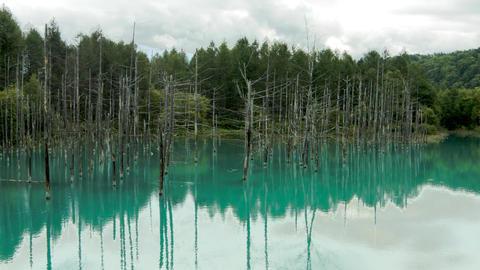 Blue Pond Live Action