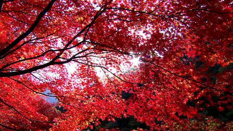 Autumn leaves Live Action