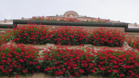 Building Facade With Red Flowers Live Action