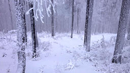 Falling snow in a winter park with snow covered trees Animation