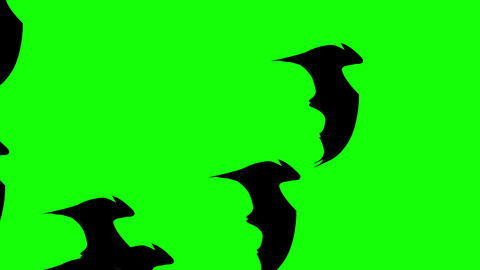 Swarm of Halloween Flat style Bats flying across green background Animation