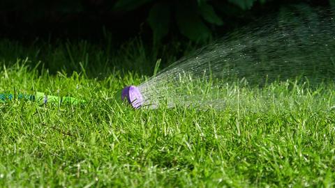 Manual garden sprayer Live Action