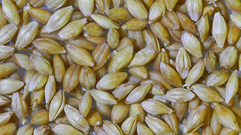 malted barley Live Action