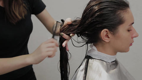 Girl hairdresser combing wet hair to a client Footage