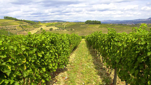 Vineyards in the hills of Portugal - beautiful nature Live Action
