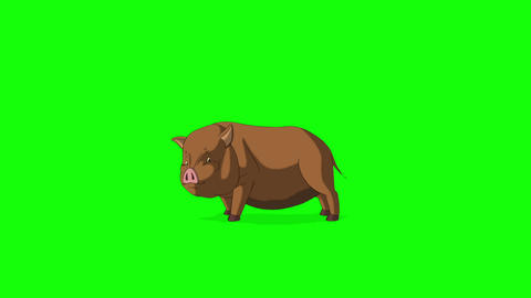Brown Little Pig Runs with a Stop Chroma Key Animation