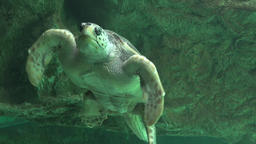 Sea Turtles And Other Marine Life Live Action