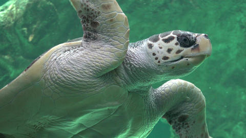 Sea Turtles Reptiles And Wildlife Footage