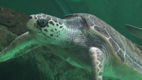 Sea Turtles And Marine Life Live Action