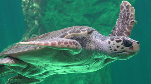 Sea Turtle And Other Marine Animals Live Action