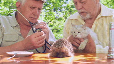 senior citizens examine cat with different colour eyes Live Action