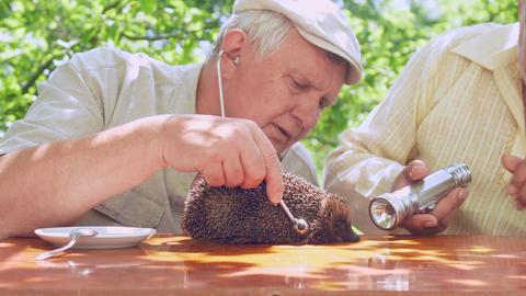 aged examine afraid hedgehog with stethoscope and flashlight Live Action