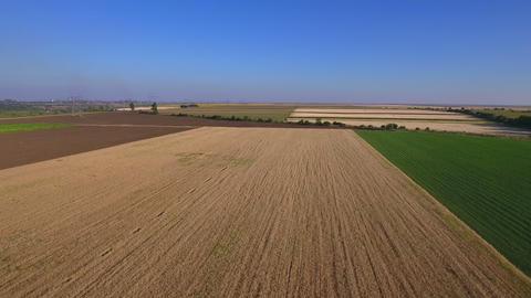 Aerial shot of a wheat field ビデオ